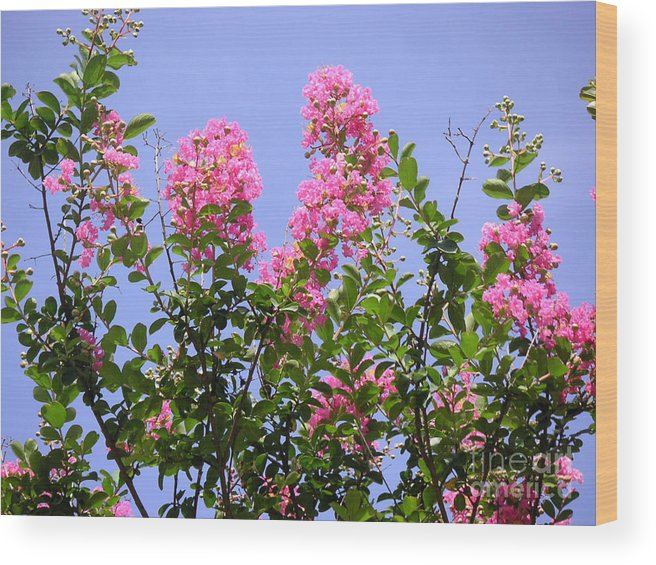 Nature Wood Print featuring the photograph Pink On Blue by Lucyna A M Green