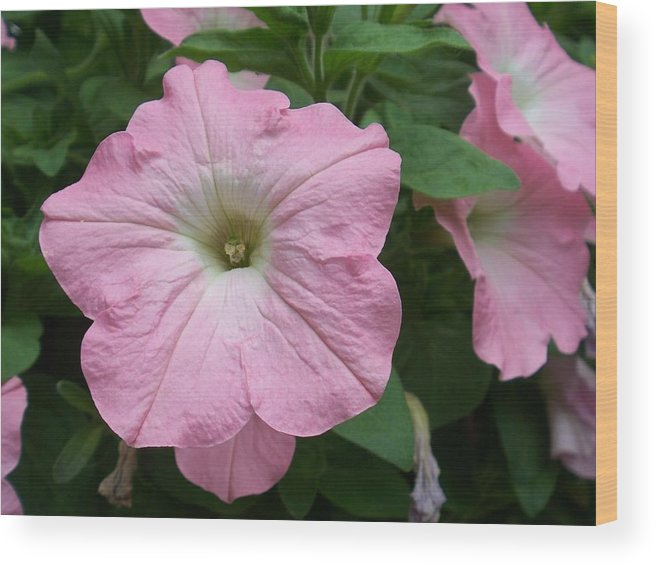Flower Wood Print featuring the photograph Pink Petunia by Ellen B Pate