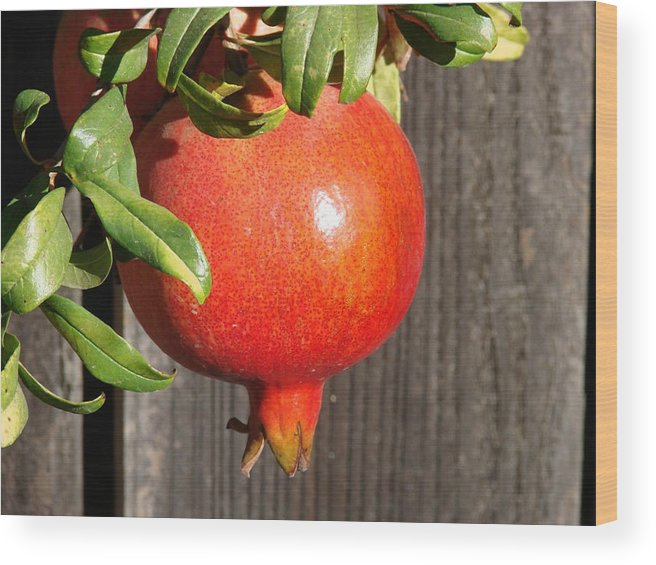 Pomegranate Wood Print featuring the photograph Pomegranate by Liz Vernand