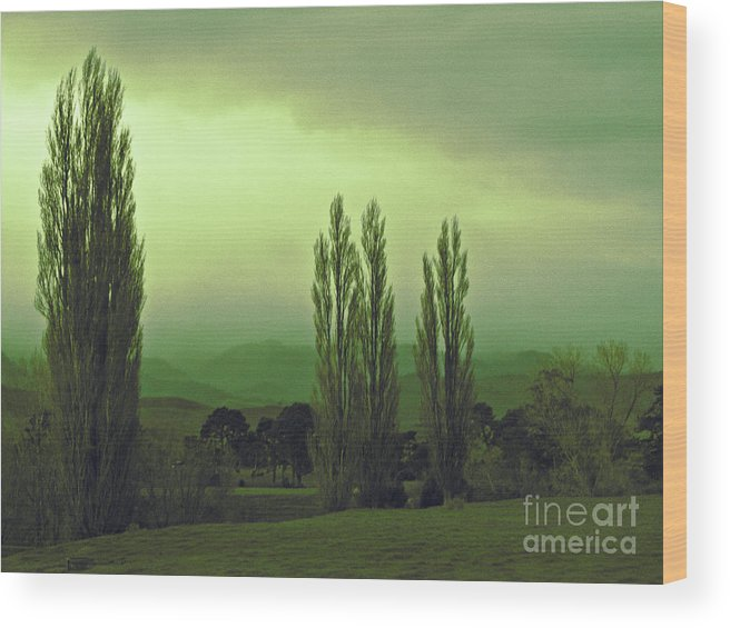 Trees Wood Print featuring the photograph Populars by Karen Lewis
