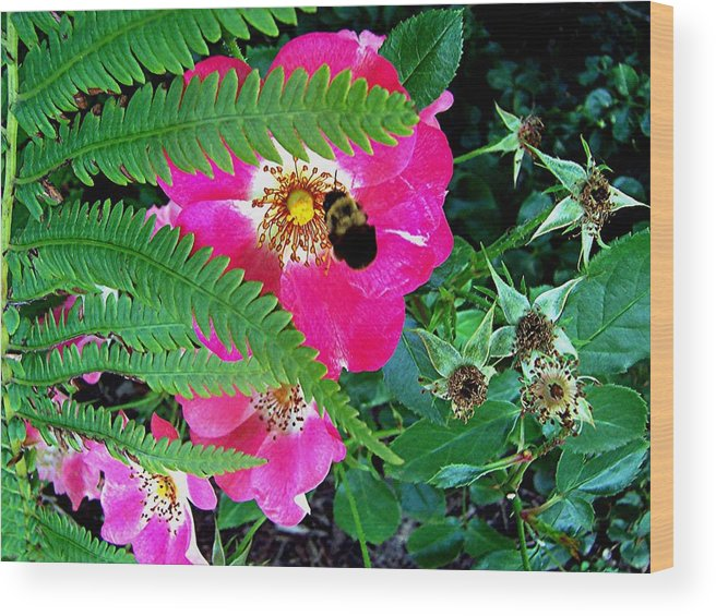 Bumble Bee Wood Print featuring the photograph Primrose And Bee by Caroline Urbania Naeem