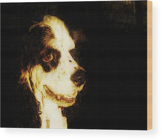 Dog Wood Print featuring the photograph Profile Of A Cocker by Rosemary McGahey