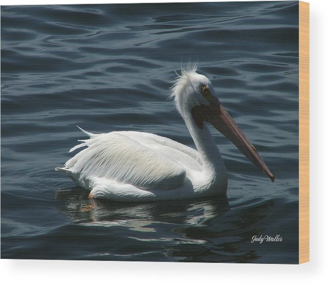 Birds Wood Print featuring the photograph Punk Pelican - Side View by Judy Waller