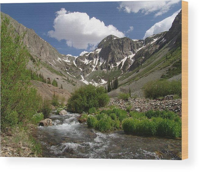 Trees Wood Print featuring the photograph Pure Mountain Beauty by Carol Milisen