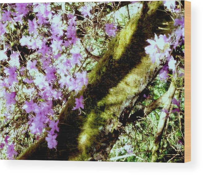 Lilac Wood Print featuring the photograph Purple Beauty by Maro Kentros