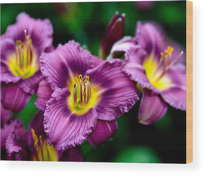 Flower Wood Print featuring the photograph Purple Day Lillies by Marilyn Hunt