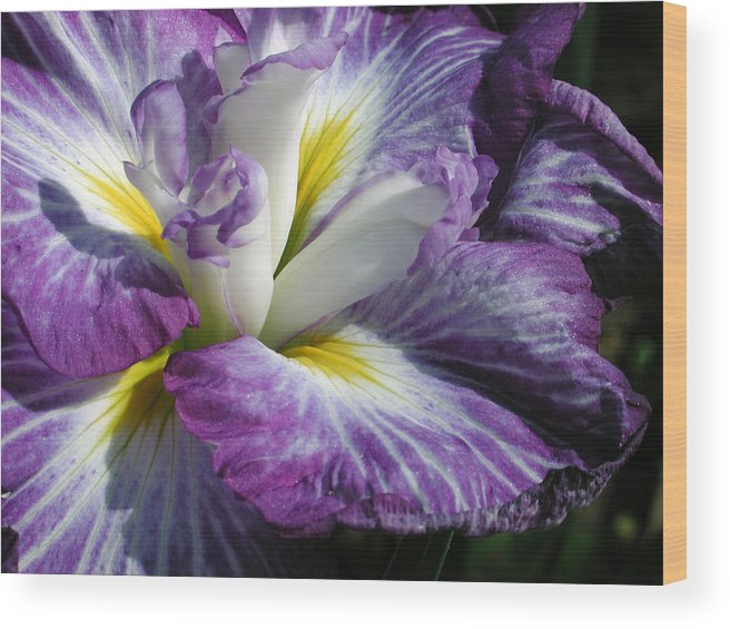 Flower Wood Print featuring the photograph Purple Flower 1 by Holly Wolfe