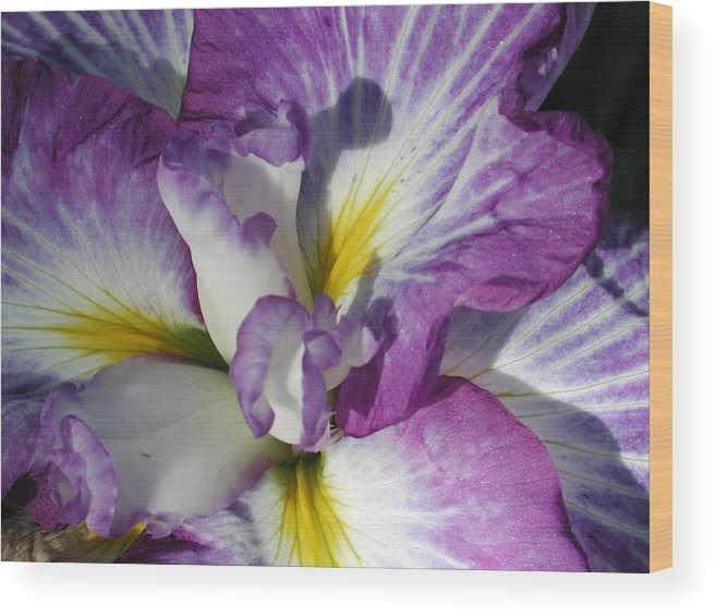 Flower Wood Print featuring the photograph Purple Flower 2 by Holly Wolfe