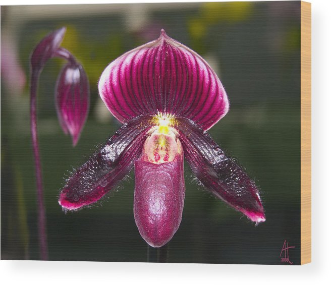 Flowers Wood Print featuring the photograph Purple Orchid by Ann Tracy