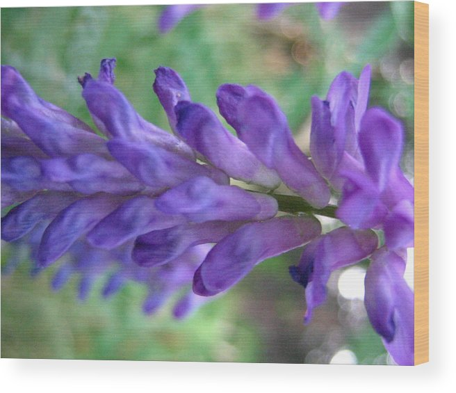 Flower Wood Print featuring the photograph Purple Wildflower by Melissa Parks