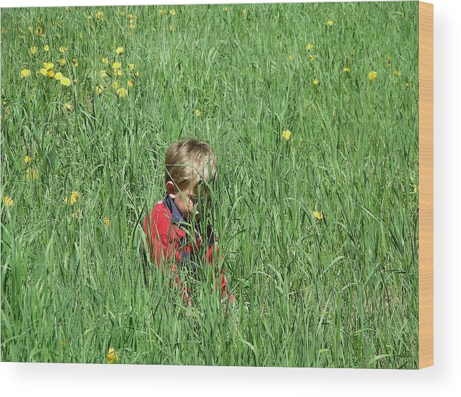 Nature Wood Print featuring the photograph Quiet Fields by Peter McIntosh