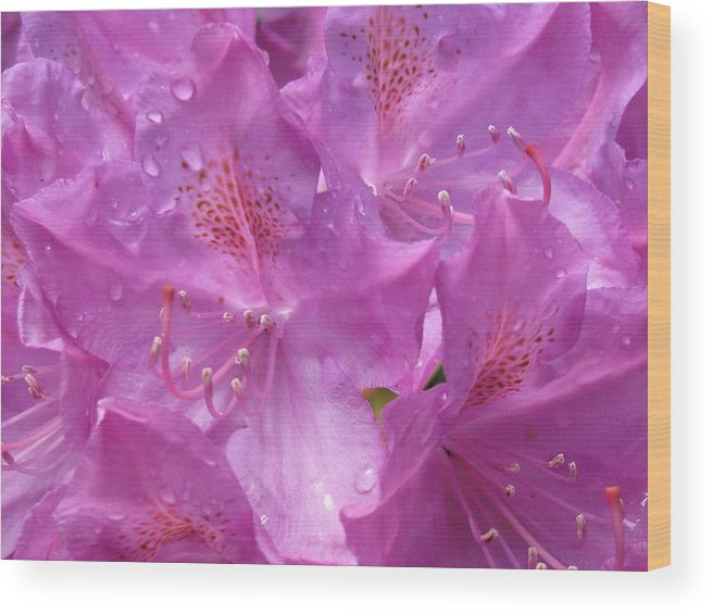 Rain Wood Print featuring the photograph Raindrops by Belinda Consten