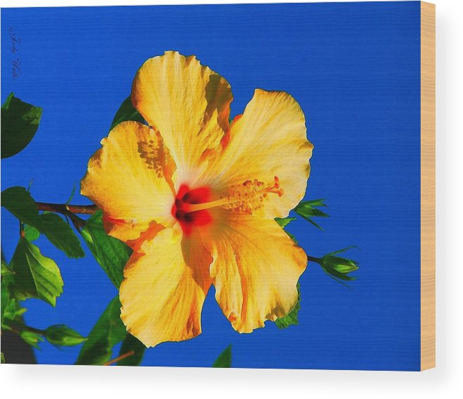 Flower Wood Print featuring the photograph Reaching For The Sky by Judy Waller