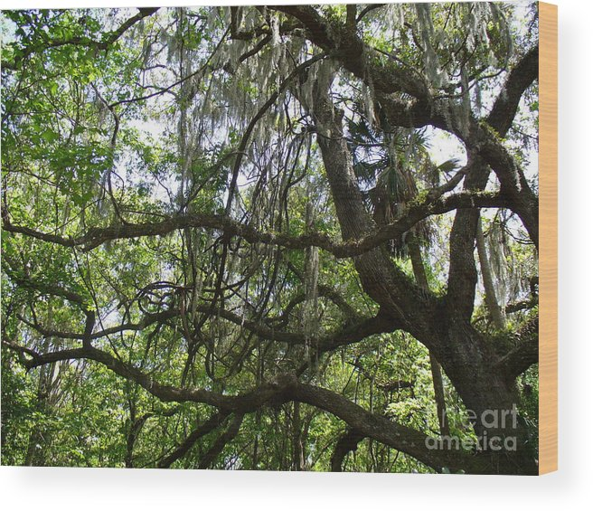 Tree Wood Print featuring the photograph Reaching by Stephanie Richards