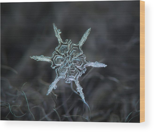 Snowflake Wood Print featuring the photograph Real Snowflake Photo - The Shard by Alexey Kljatov