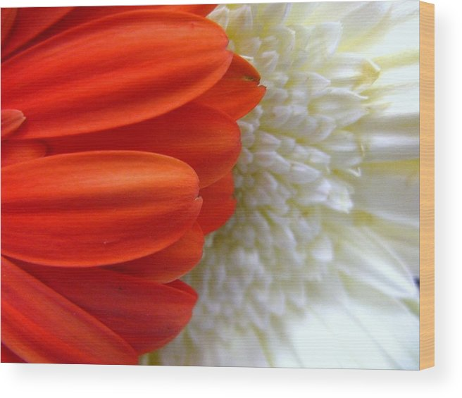 Flowers Wood Print featuring the photograph Red And White by Rhonda Barrett
