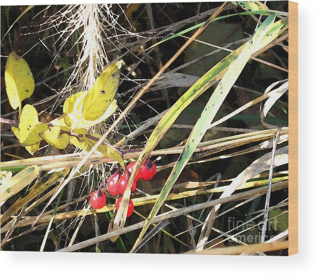 Berries Wood Print featuring the photograph Red Berries by Gary Everson