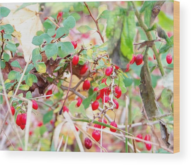 Maine Wood Print featuring the photograph Red Berry New England by Wendy Holt Castiglione