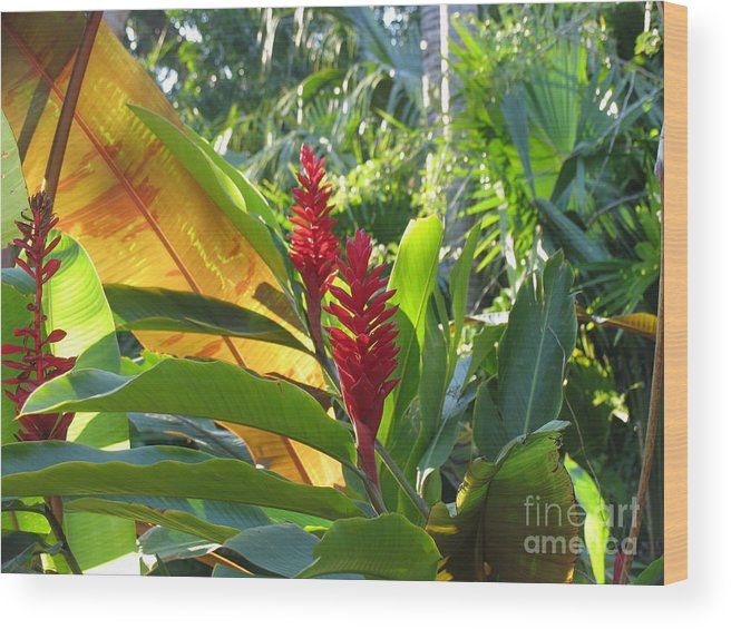 Red Wood Print featuring the photograph Red Ginger by Stephanie Richards