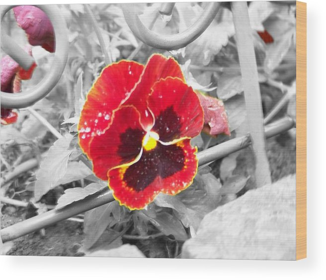 Flowers Wood Print featuring the photograph Red by Jessica Burgett