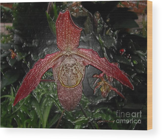 Orchid Wood Print featuring the digital art Red Lady Slipper by Donna Brown