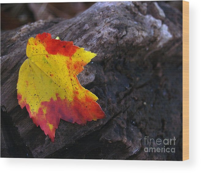 Leaf Wood Print featuring the photograph Red Maple Leaf On Old Log by Anna Lisa Yoder