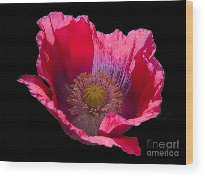 Flowers Wood Print featuring the photograph Red Poppy On Blk Velvet by Neil Doren
