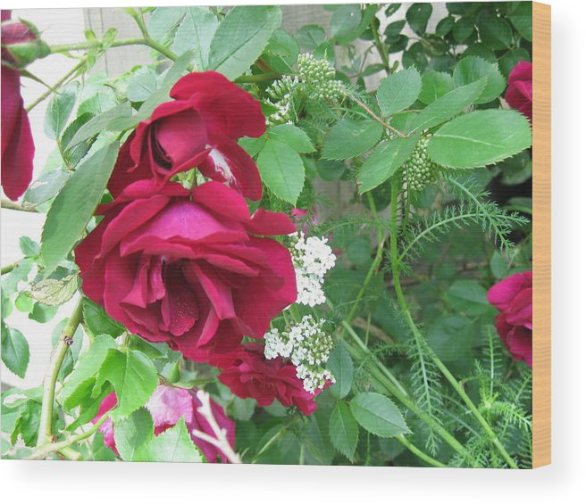Nature Flower Wood Print featuring the photograph Red Rose by Rose Dellinger