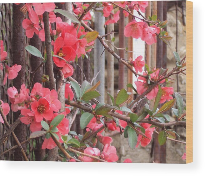 Landscape Wood Print featuring the photograph Red Spring by David Du Hempsey