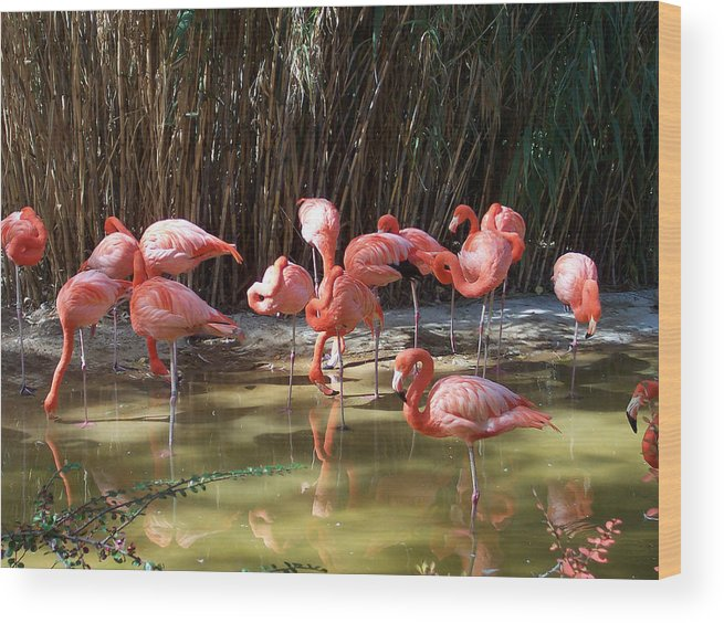 Nature Wood Print featuring the photograph Reflections by Claude Marshall