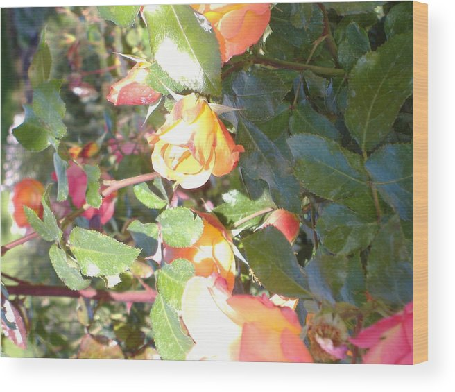 Rose Wood Print featuring the photograph Rose Art by Alice Eckmann