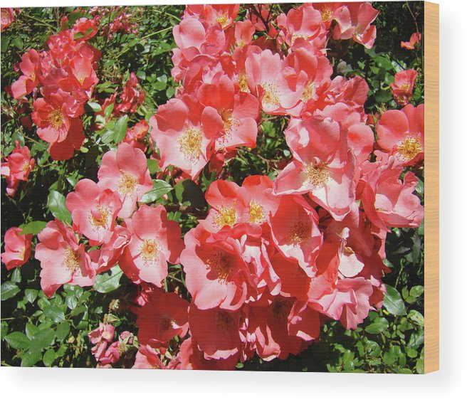 Rose Wood Print featuring the photograph Rose Garden Pink Roses Botanical Landscape Baslee Troutman by Baslee Troutman