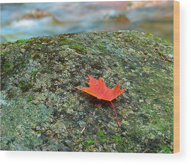 New England Wood Print featuring the photograph Sabbaday Brook by Juergen Roth