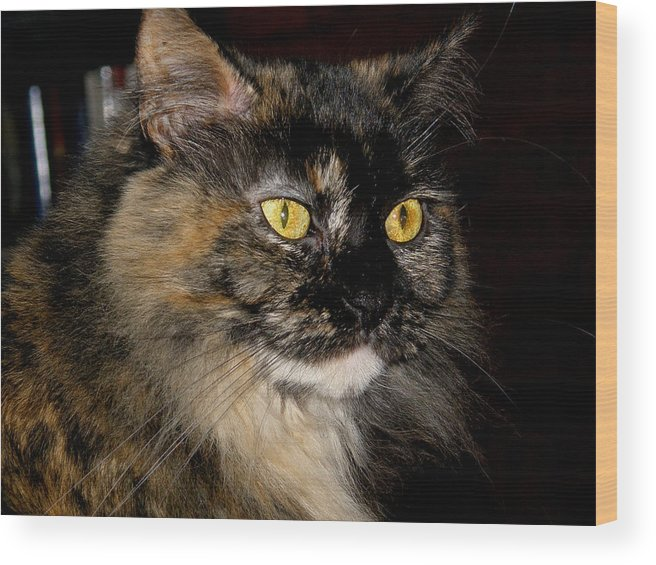 Kitty Wood Print featuring the photograph Samantha by Martin Morehead