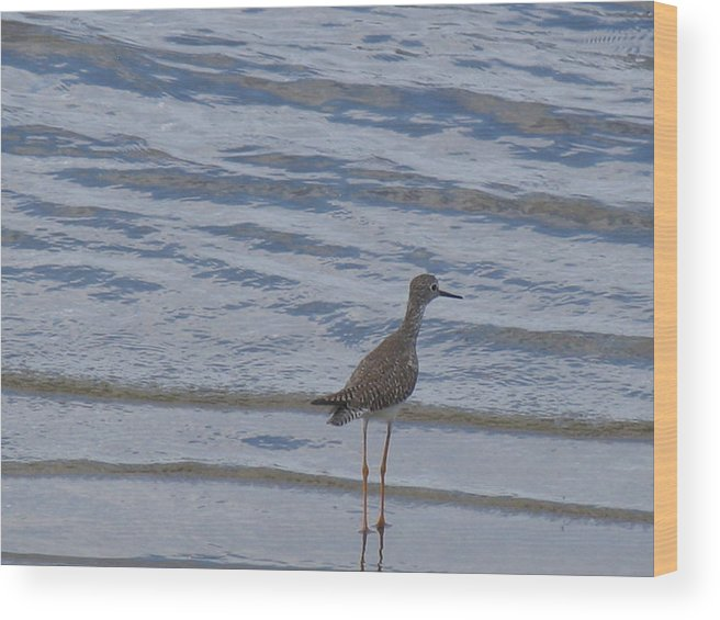 Sandpiper Wood Print featuring the photograph Sandpiper by Arry Murphey