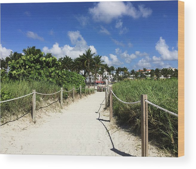 Sandy Wood Print featuring the photograph Sandy Trail Miami Florida by Olga Kurygina