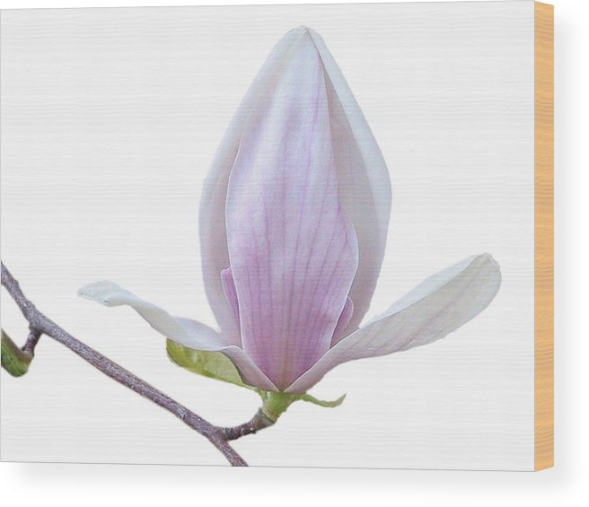 White Wood Print featuring the photograph Scent Of A Magnolia by Christine Till