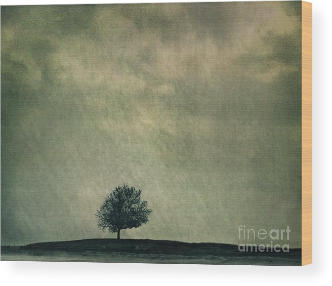 Blue Wood Print featuring the photograph Screaming At The Top Of My Voice by Dana DiPasquale