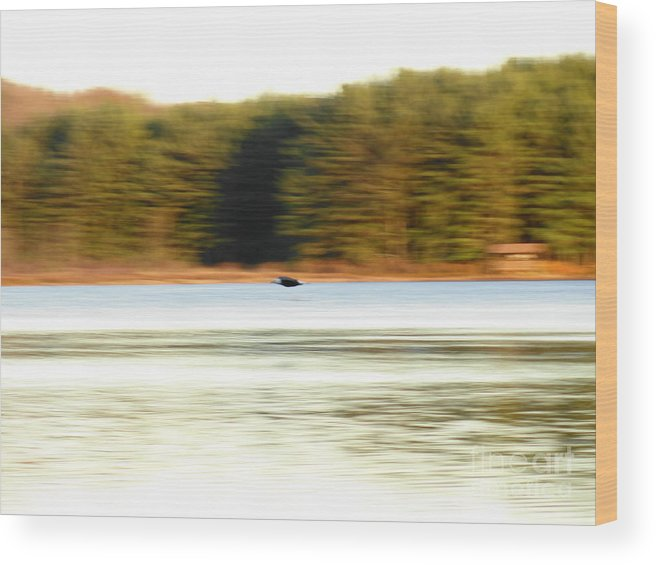 Screaming Wood Print featuring the photograph Screaming Eagle by Daniel Guy Henning