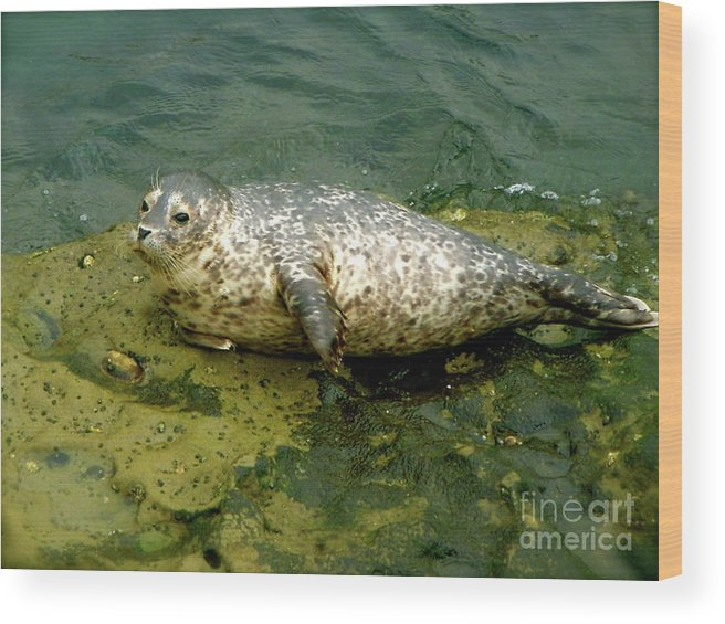 Ocean Wood Print featuring the photograph Sea Pup by Amy Strong