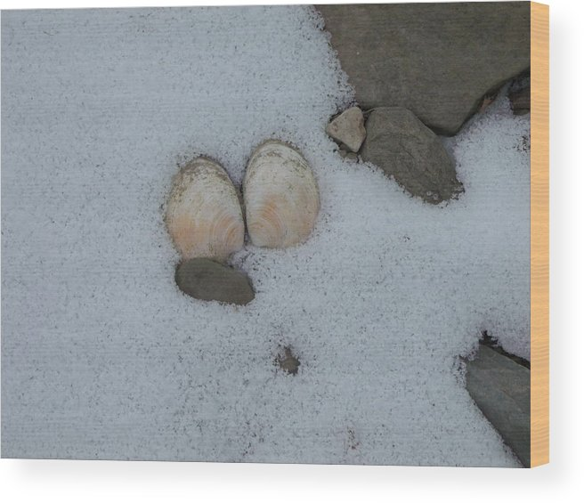 Snow Wood Print featuring the photograph Sea Shells In Snow by Jeremiah Wilson