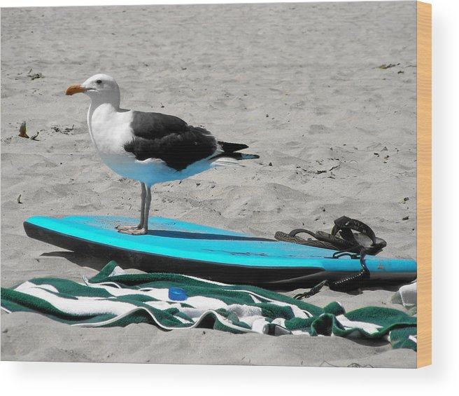 Bird Wood Print featuring the photograph Seagull On A Surfboard by Christine Till