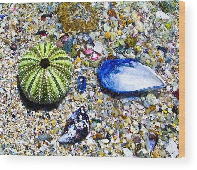 Seashore Wood Print featuring the photograph Seashore Colors by Douglas Barnett