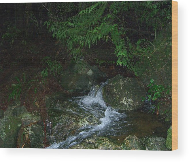 Water Wood Print featuring the photograph Secret Water by Jim Thomson