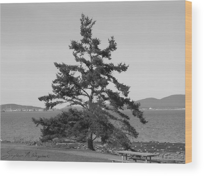 Trees Wood Print featuring the photograph Serious Outlook by Stephanie Wagenbach
