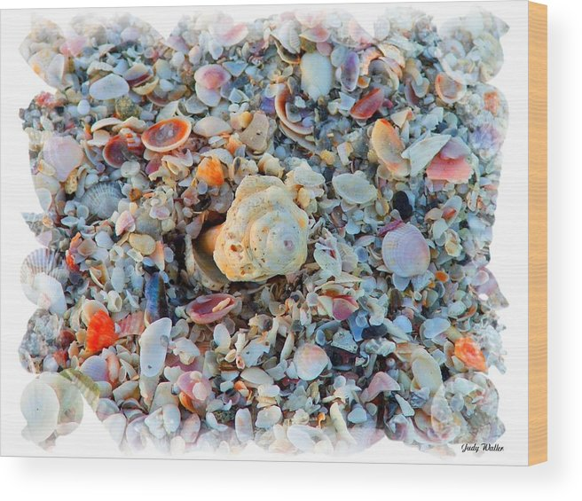 Shells Wood Print featuring the digital art Shells by Judy Waller