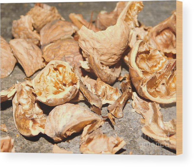 #landscape #walnut #nuts #crackednut #walnuts #dryfruits #photography #beautiful Wood Print featuring the pyrography Shells Of Nut by Baacha Photographer