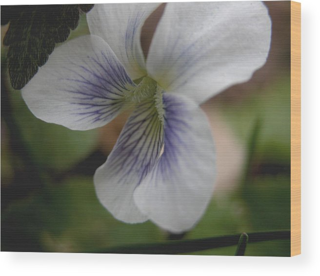 Violet Wood Print featuring the photograph Shrinking Violet by Michelle Hastings