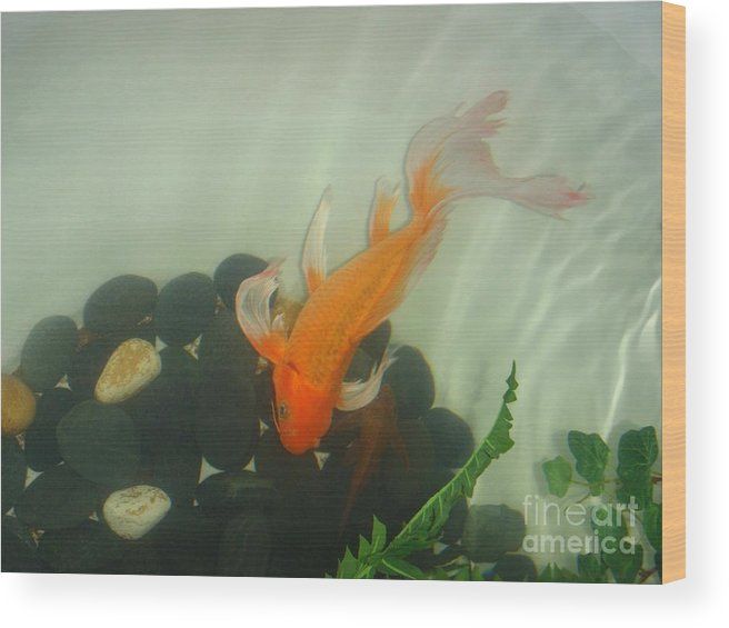 Orange Wood Print featuring the photograph Siamese Fighting Fish 1 by Mary Deal