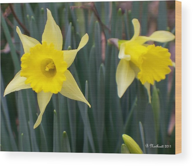 Daffodil Wood Print featuring the photograph Sign Of Spring by Betty Northcutt
